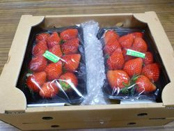 120405strawberry02