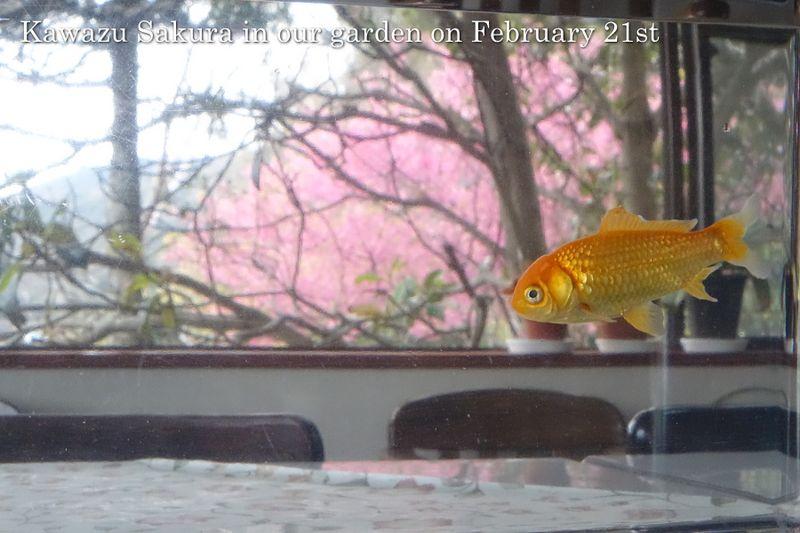 140221fish01