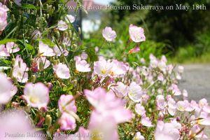 140518flowers01
