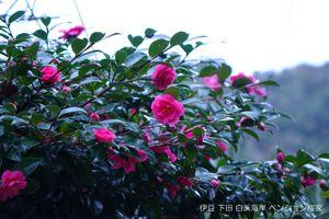 141102flower02