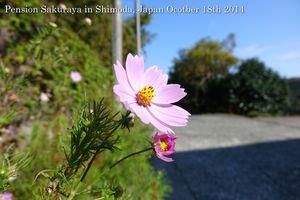 141018flower01
