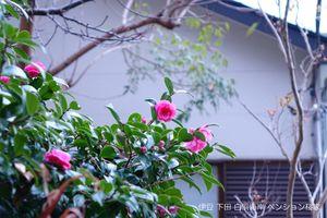 141102flower01