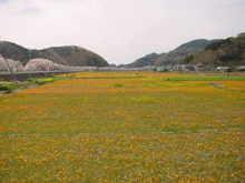 Hanabatake01