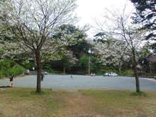 090331sakura01_2